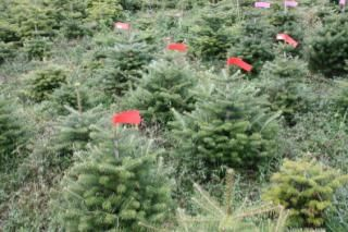 Christmas Tree Summer Weed Control The Christmas Tree Farm
