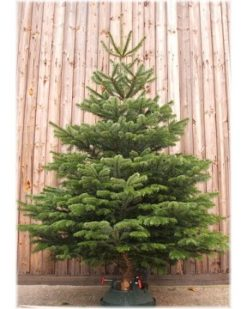 Christmas Trees including nationwide delivery