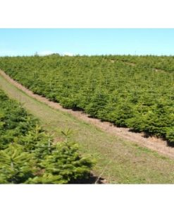 090930200625nord-plantation