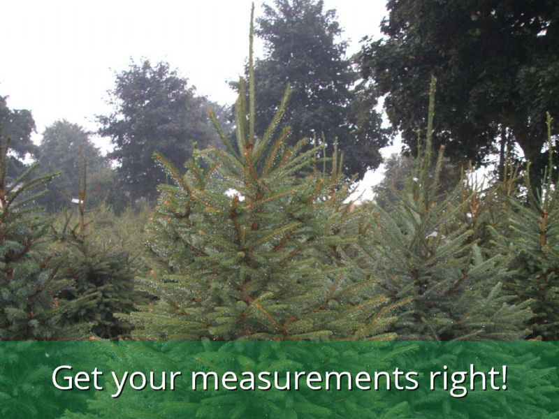 Are you ordering the right size Christmas tree? - Are You Ordering The Right Size Christmas Tree? - The Christmas Tree