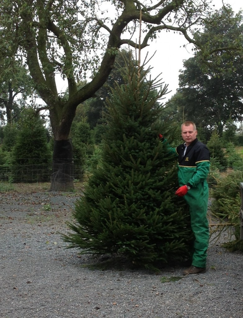 Norway spruce for Asda