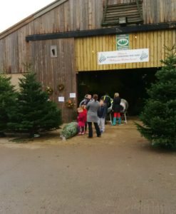 Real Christmas Trees to choose from the farm