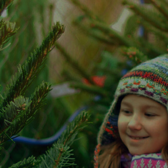 Choose Your Own Real Christmas Tree at Billingley Christmas Tree Farm