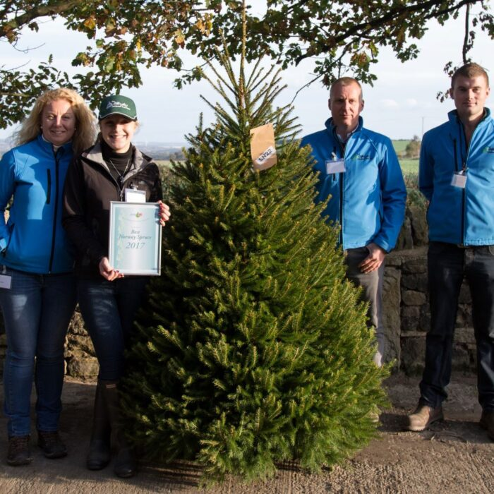 Winning Norway Spruce