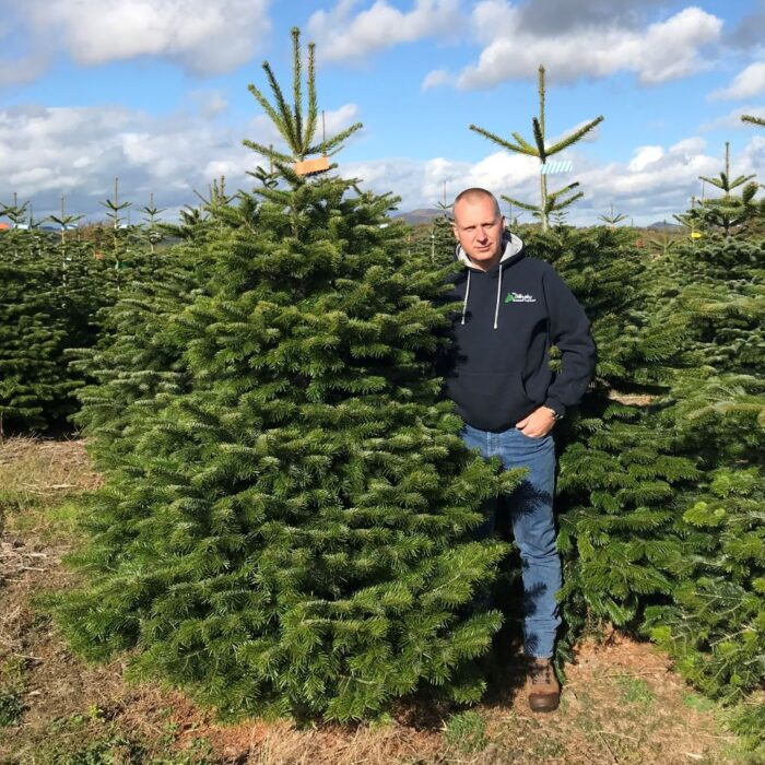 Nordman Fir Real Christmas Tree